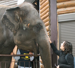 Mayuka at Zoo with Elephant