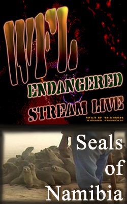 Seals of Namibia BNR Sm