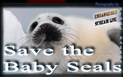 Save the baby Seals Sm BNR
