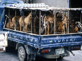 Dogs in Transport